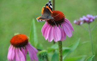 vlindervallei 2